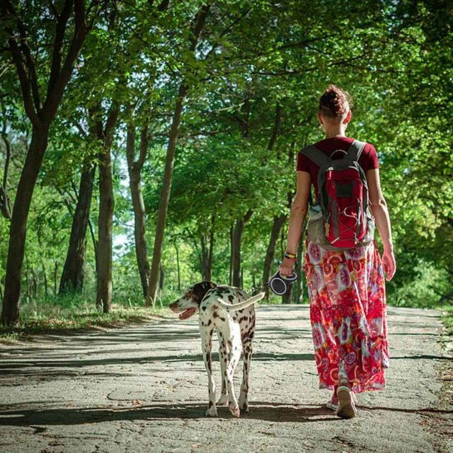retractable dog leash gray 3 150x150 crop center 7f2964d9 fa32 4a08 ba4f